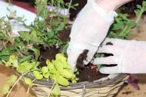 Close up hands planting 2015 web